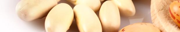 fagioli-beans-legumi-pulses
